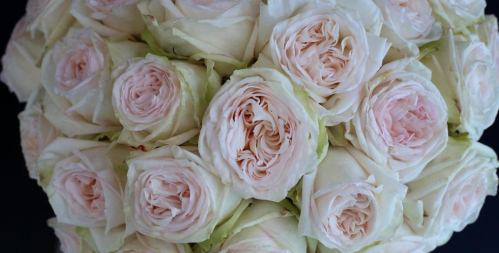 Premium O'Hara Garden Roses