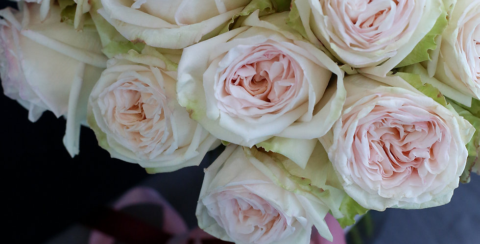 Valentine's Day white garden rose