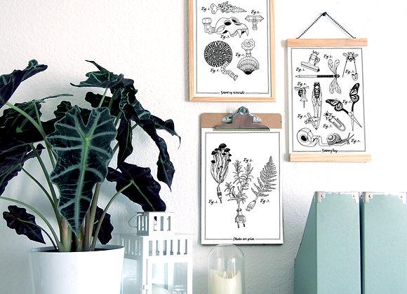 Affiche(s) botanique(s)