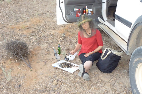 At work in the Outback