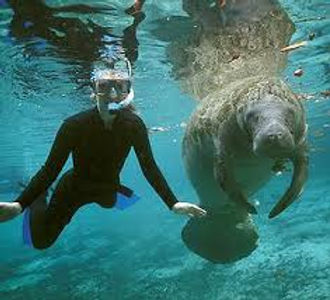 manatee-tours-homosassa.jpeg