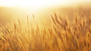 Grains, Gluten and Dairy