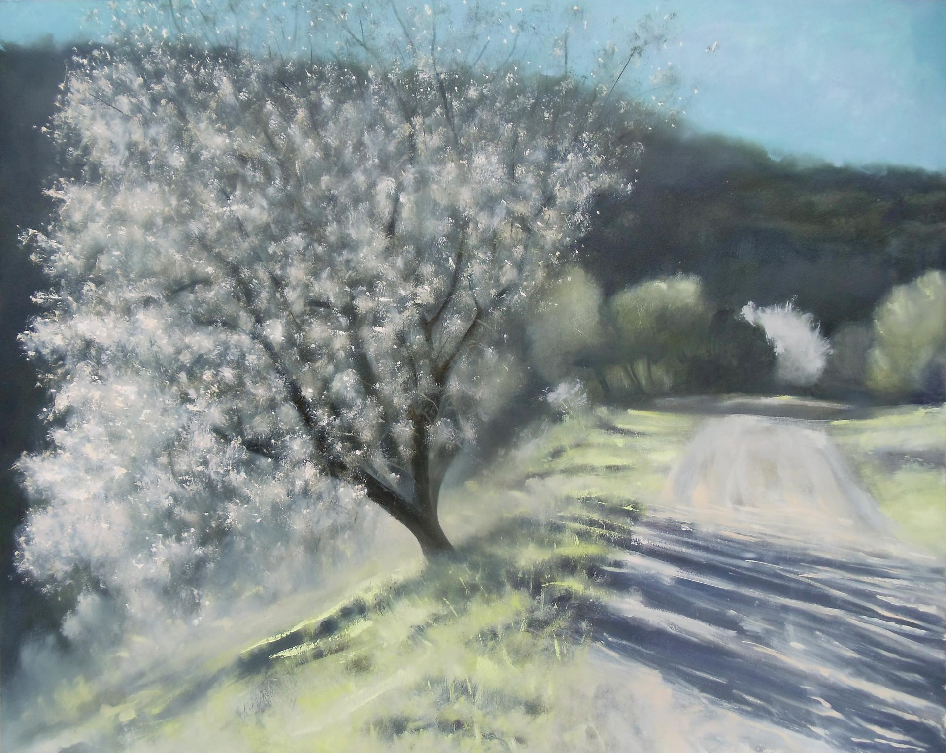 SOLD - Almond Blossom, Sataf Israel