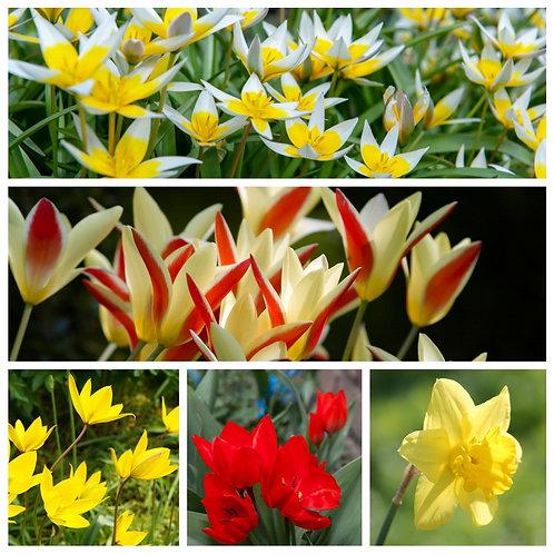 Sonniger Blütenmix - Kollektion Petra Pelz (250St. - reicht für 10-15m²l)