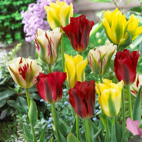 Tulpenmischung Mixed Springgreens (250St. - reicht für 15-20m²)
