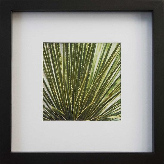 Foto print Botanica 1 in lijst (zwart)