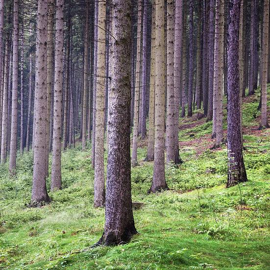 Houten fotoblok Forest II