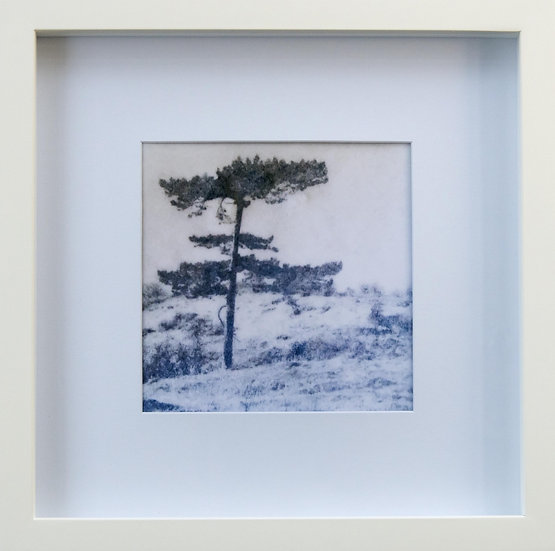 Foto print Trees 2 in lijst (wit)