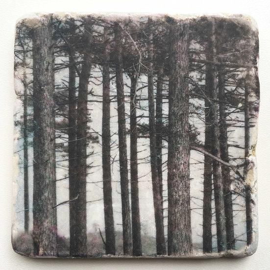 Foto tegel, Trees 12