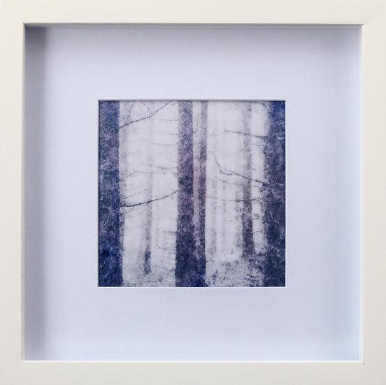 Foto print Trees 4 in lijst (wit)
