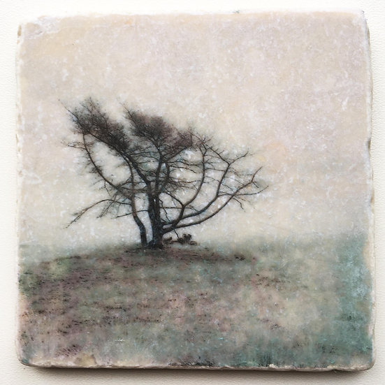 Foto tegel, Trees 14