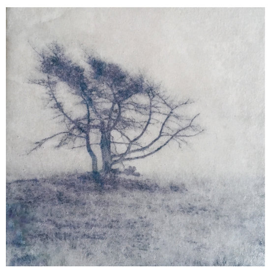Kunstkaart Bomen, nr. 6