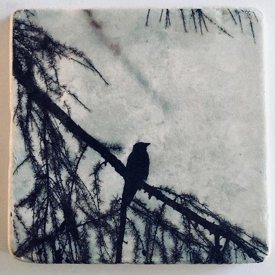 Foto tegel, Bird 3