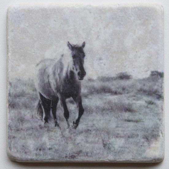 Foto tegel, Wild Horses 1