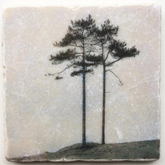 Foto tegel, Trees 5