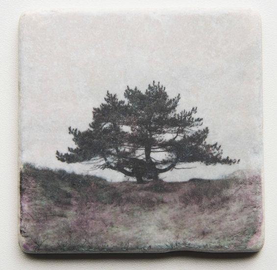 Foto tegel, Trees 7