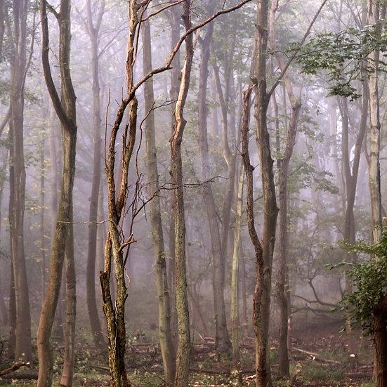 Houten fotoblok Forest III