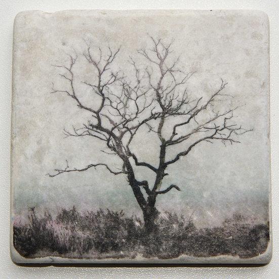 Foto tegel, Trees 1