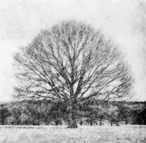 Houten fotoblok Tree I