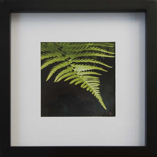Foto print Botanica 3 in lijst (zwart)