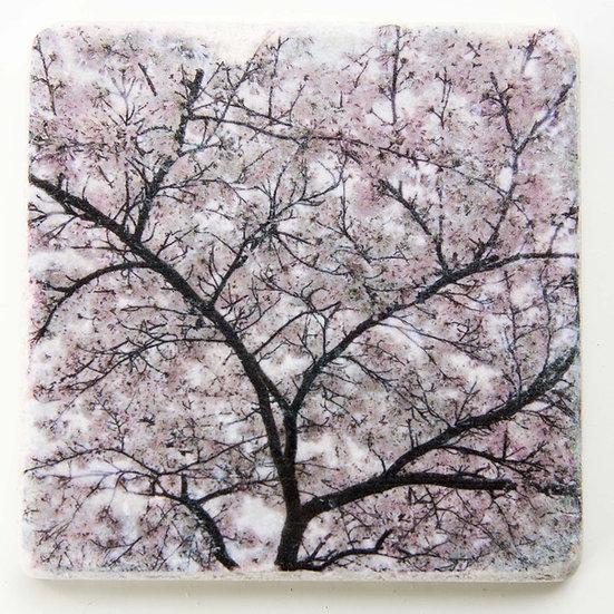 Foto tegel, Blossom 3