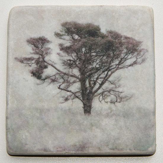 Foto tegel, Trees 9