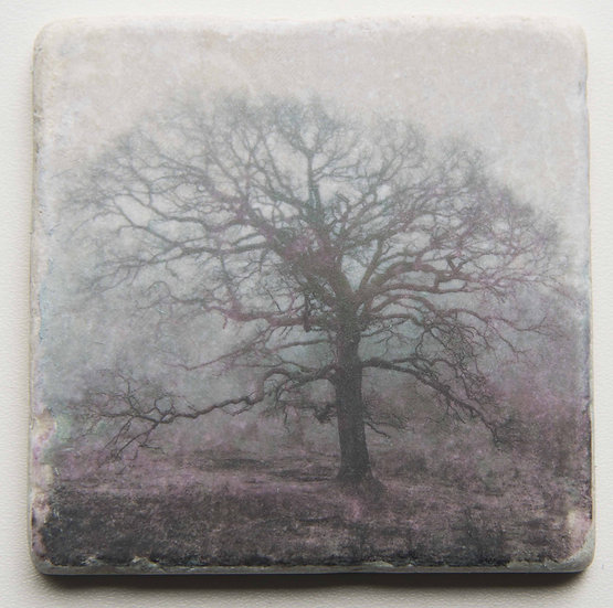 Foto tegel, Trees 6