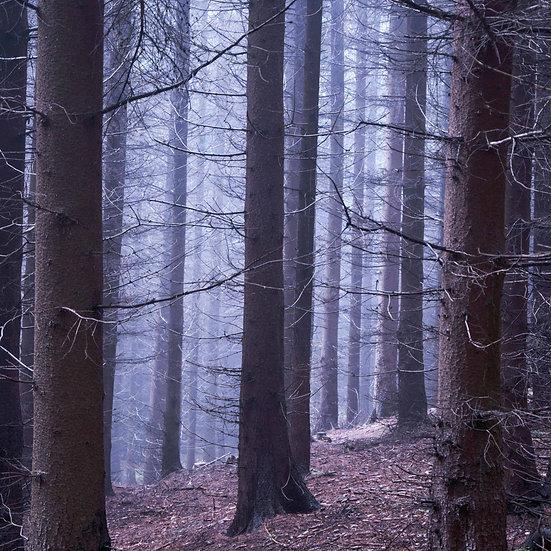 Houten fotoblok Forest