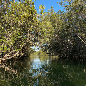 Why Mangrove Deforestation is Happening & What's Being Done About it