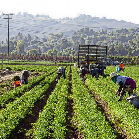 The United Farm Workers as a Network for Conscious Consumption