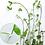 Thumbnail: מדבקות לטיפוס צמחים - 4 יח׳