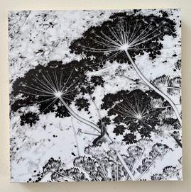 Monet's Garden - Carol H. Macleod.JPG