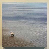 David  Sullivan -  Baby Plover.jpg