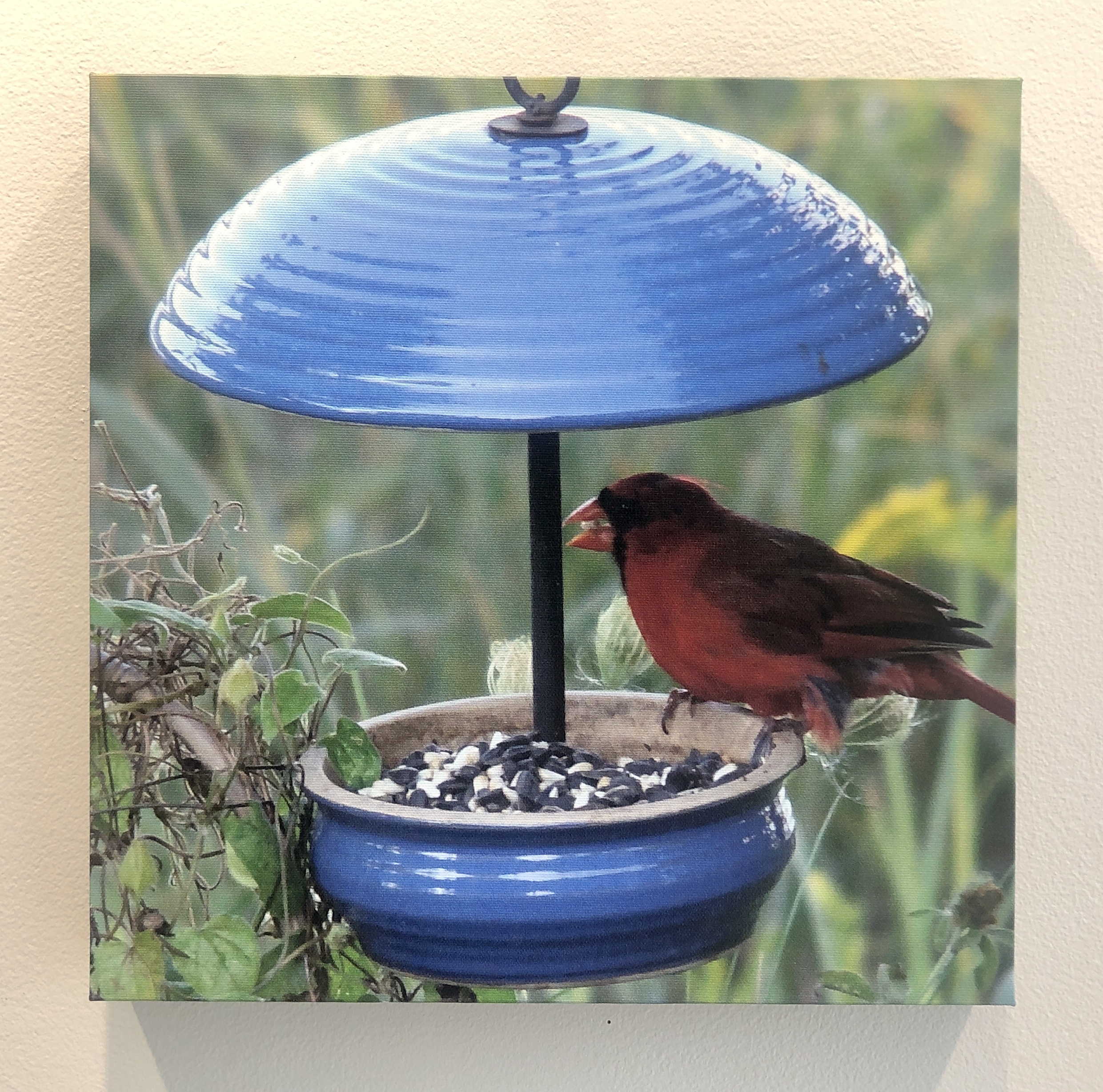 Paula Gagnon - Cardinal On Feeder