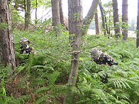 In the ferns