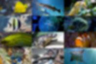 L'aquarium de Biarritz au rocher de la Vierge