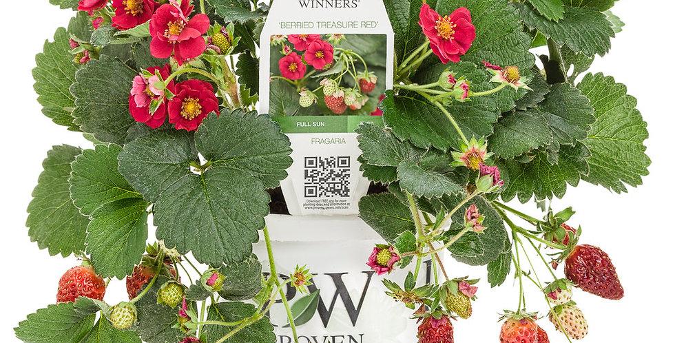 Berried Treasure® Red Strawberry    Proven Winners
