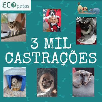 Na Ecopatas, material reciclado vira castração de animais carentes. Reprodução: redes sociais