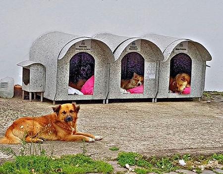 Casinhas para animais de rua em Lages, SC. Imagem: reprodução redes sociais