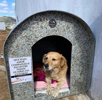 Abrigos para cães são pagos em vaquinhas online. Foto: reprodução redes sociais