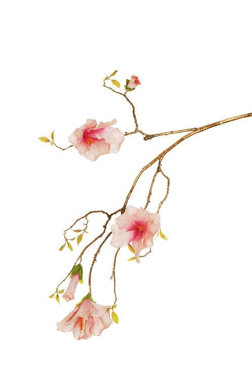 HIBISCUS SPRAY FLOWERS ROSA
