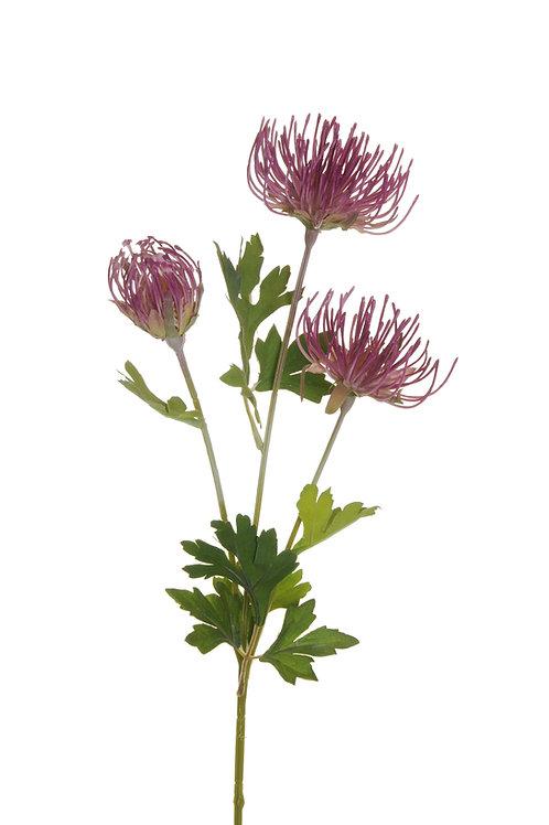 Cordifolium plant