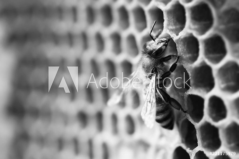 AdobeStock_221175979_Preview.png