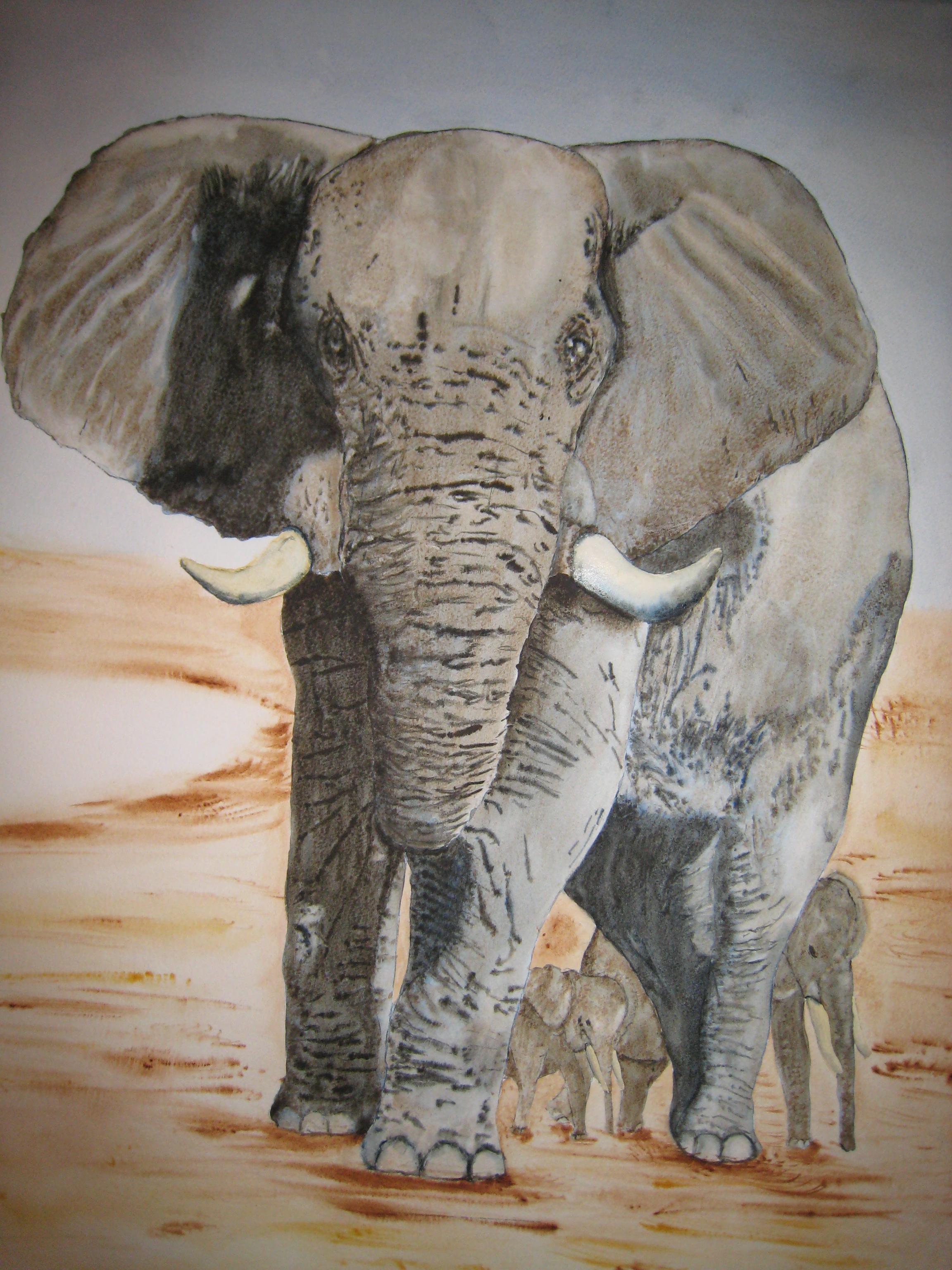 L'éléphant du Kénya
