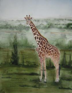 Une girafe au Kénia