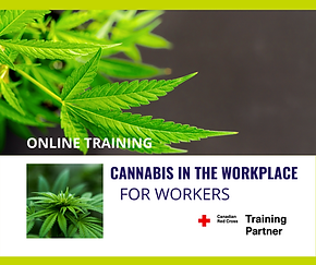 Cannabis_Workers.png