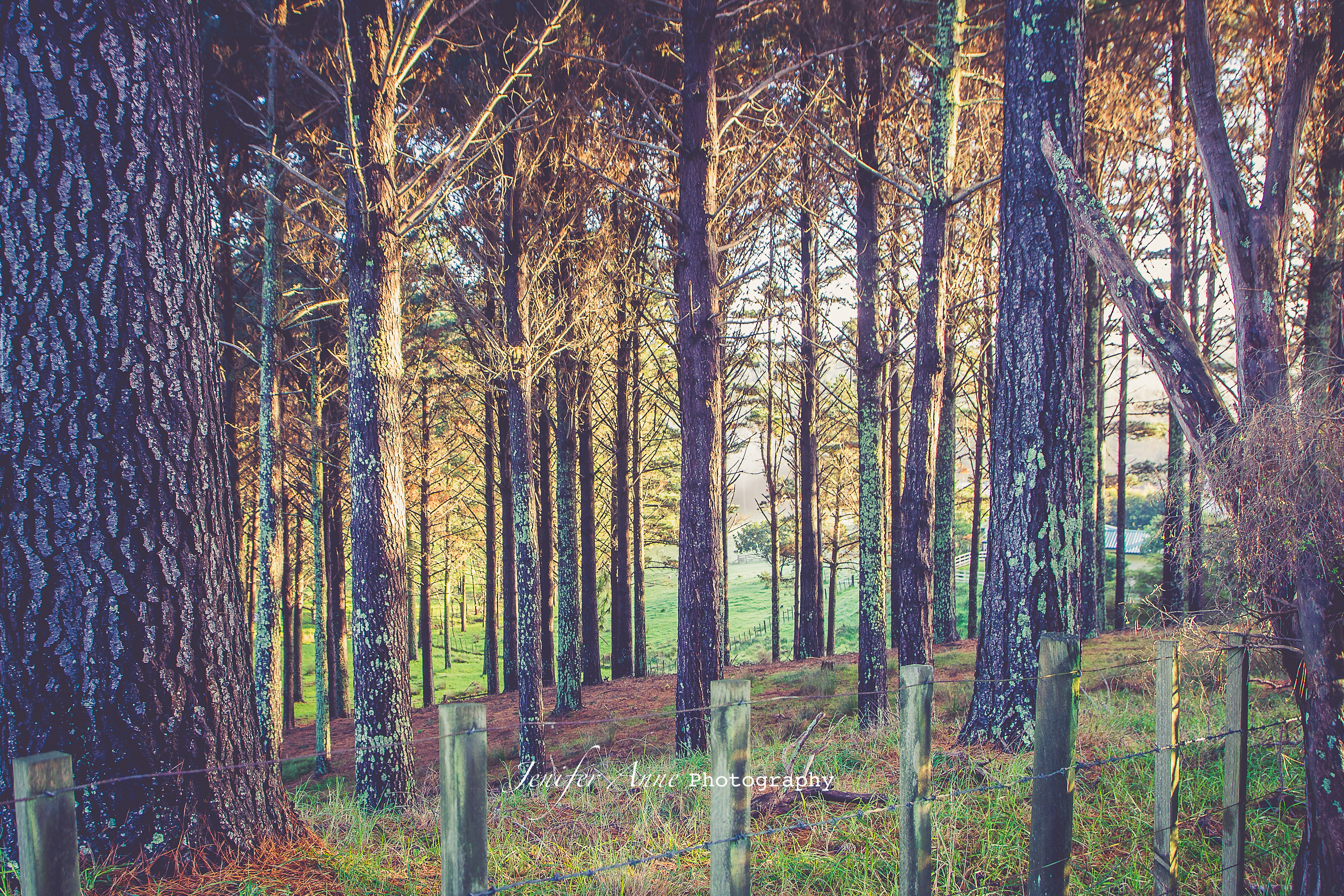 Forest @ Muriwai