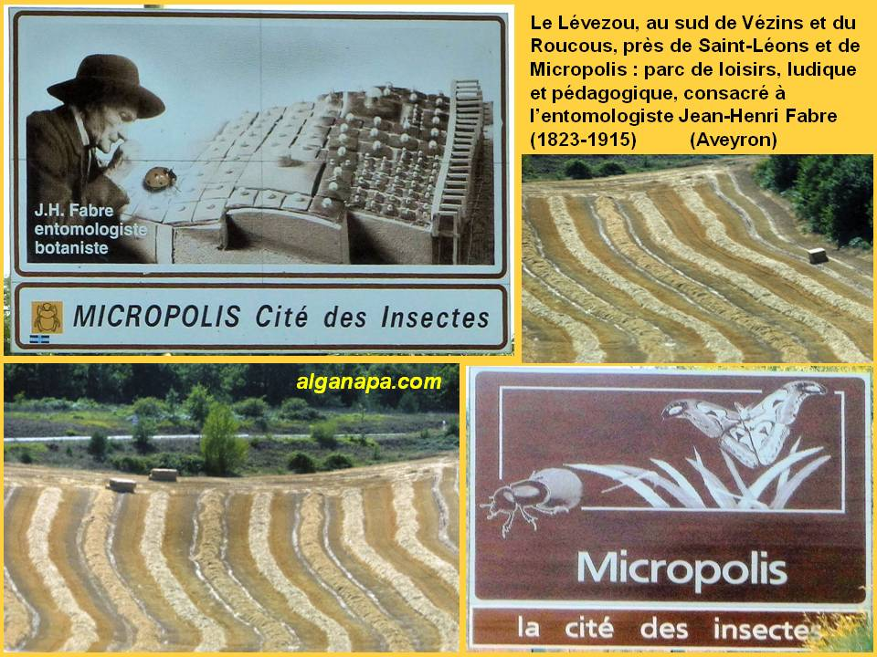 Diapositive223