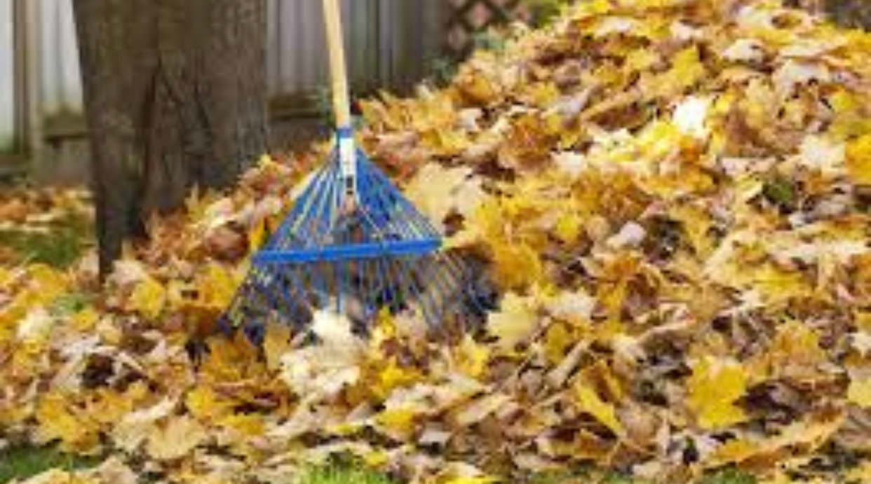 Leaf Removal, Cleanup and Maintenance