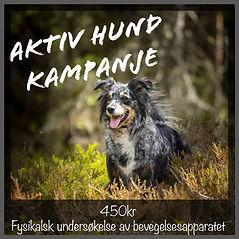 aktiv hund kampanje.jpg